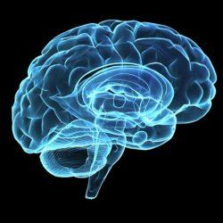 Neuropasta